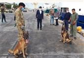 سگهای موادیاب در گمرک بوشهر مستقر شدند/ بازرسی شناورها با هدف جلوگیری از قاچاق کالا