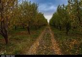 جنازه منتسب به معین شریفی پس از 123 روز در جنگلهای کردکوی کشف شد