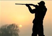 اقدام جالب دوستداران محیط زیست برای جذب شکارچیان نادم + فیلم
