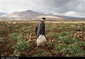 بخشی از مطالبات چغندرکاران آذربایجان غربی باقی مانده است
