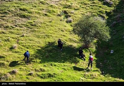 احیاء جنگل های زاگرس در منطقه خائیز-خوزستان