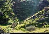 ورود تخصصی بسیج سازندگی فارس در حفظ و احیای جنگلها؛ محرومیتزدایی با اجرای پروژههای آبخوانداری