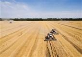 روسیه برای تثبیت قیمت مواد غذایی مالیات صادرات گندم را 2 برابر کرد