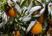 هواشناسی ایران 99/10/17| هشدار سازمان هواشناسی به کشاورزان/ کاهش 8 درجهای دما در برخی استانها