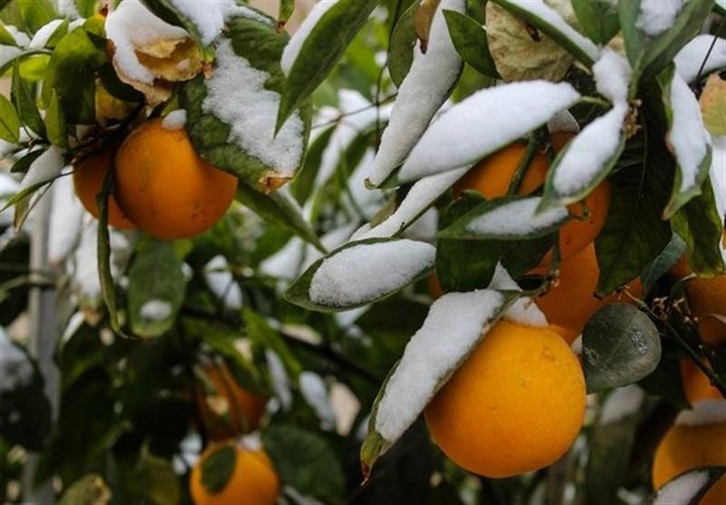 هواشناسی ایران ۹۹/۱۰/۱۷| هشدار سازمان هواشناسی به کشاورزان/ کاهش ۸ درجهای دما در برخی استانها