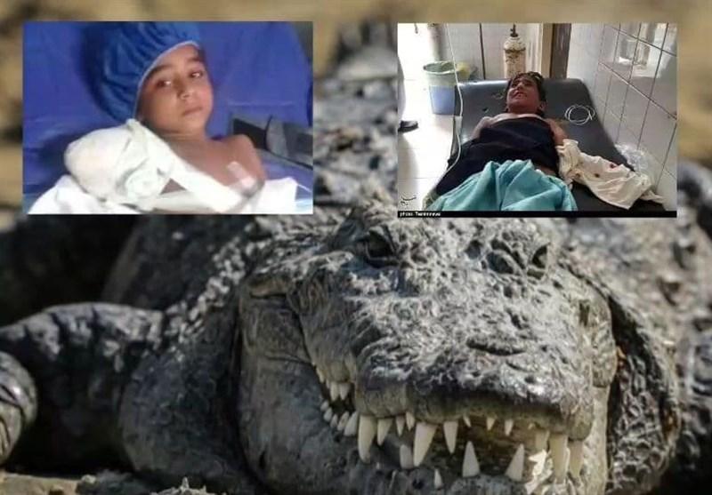 گاندو دوباره حادثه آفرید/ یک کودک اهل دشتیاری در حمله تمساح پوزه کوتاه زخمی شد
