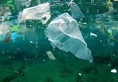"""""""بلع مواد پلاستیکی""""، عامل تلف شدن 80 گونه جانوری"""