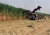 رئیس مجمع نمایندگان خوزستان: برای تداوم تولید و اشتغال باید مالکان فعلی هفت تپه خلع ید شوند