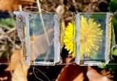 ساخت سلولهای خورشیدی صاف و شفاف با ترکیب 2 ماده نیمه هادی