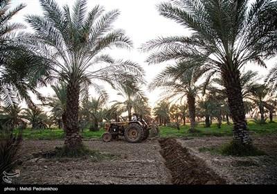 """روستای علوه در فاصله 15 کیلومتری کوت عبدالله ، مرکز شهرستان کارون واقع شده است و در حال تبدیل شدن به یکی از کانون های گردشگری منطقه می باشد.روستای علوه دارای نخلستان های فراوان و باغات چای ترش است.این روستا کمترین خسارت را در سیل سال ۹۸بخود دید.علوه در زبان عربی به معنای """"مکان مرتفع"""" می باشد."""