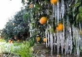 خطر سرمازدگی در 2 روز آینده باغات و مرغداریهای قزوین را تهدید میکند