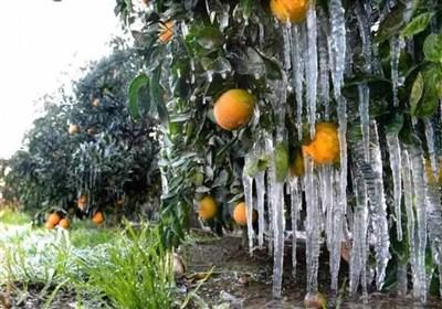 کشاورزان کاشانی منتظر خسارت ناشی از کاهش محسوس دمای هوا باشند