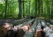 تعداد پروندههای قاچاق چوب در گیلان 30 درصد افزایش یافت