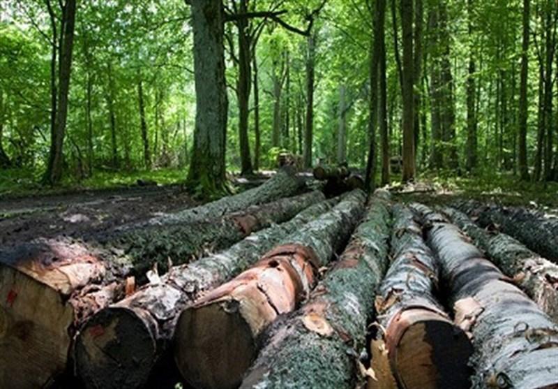 تراژدی قاچاق چوب در ایران| قاچاق چوب از جنگلهای شمالغرب به اوج رسید / تغییر شیوه و شگردهای قاچاق چوب در آذربایجان غربی
