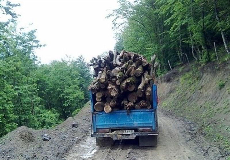 تراژدی قاچاق چوب در ایران| حکایت تلخ تسنیم از قاچاق چوب در جنگلهای گلستان / ادامه قتل عام درختان هیرکانی چند صد ساله + فیلم