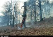تمامی جنگلهای هیرکانی مازندران تا پایان سال پایش میشود