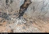 سوز سرمای زمستان بی رحمانه درختان بلوط کهگیلویه و بویراحمد را گردن میزند