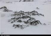 هواشناسی ایران 99/11/14  آغاز بارش برف و باران از پنجشنبه/ افزایش آلودگی هوا در کلانشهرها