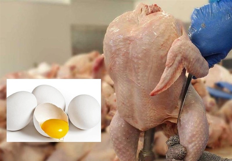 واکنش فعالان مرغ و تخممرغ به حذف دلار 4200|موافقان:گران میشود ولی مردم مجبورند بخرند/مخالفان:مرغ هم مثل گوشت از سفره میپرد