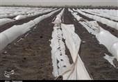 آخرین جزئیات طوفان در جازموریان؛ برق 4 روستا هنوز قطع است