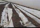 طوفان و تندباد 235میلیارد تومان به بخش کشاورزی اصفهان خسارت وارد کرد
