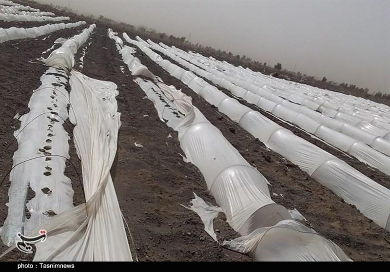 کشاورزی , استان کرمان ,