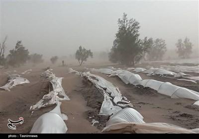 """طوفان """"کشاورزی"""" مردم زهکلوت را با خاک یکسان کرد / مسئولان به یاری مردم منطقه بشتابند + تصاویر"""