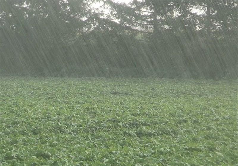 بارش باران در استان بوشهر نسبت به سال گذشته 48 درصد کاهش یافت