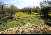 """تخریب 11 هزار هکتار پوشش گیاهی برای احداث """"سیلبند""""!"""