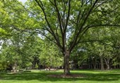 Living near Trees May Prevent Vascular Damage from Pollution