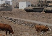 ارتش رژیم صهیونیستی 7 گاو توقیف شده را آزاد کرد