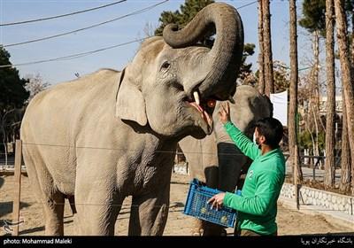 فیل های سریلانکایی در باغ وحش ارم سبز