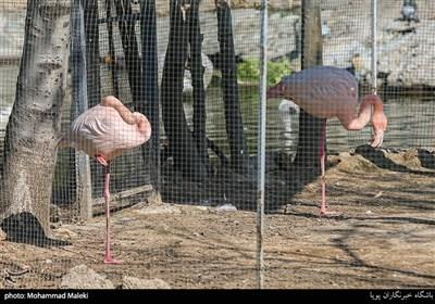 فلامینگو در باغ وحش ارم سبز