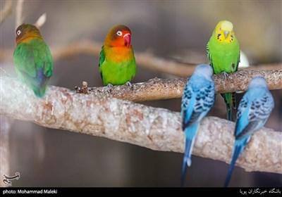 طوطی و مرغ عشق در باغ وحش ارم سبز