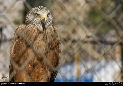 عقاب در باغ وحش ارم سبز