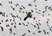 کاهش قابلتوجه پرندگانِ تهران