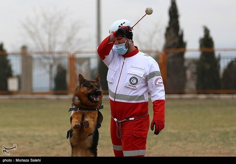 تمرین سگ های جستجو و نجات هلال احمر اصفهان