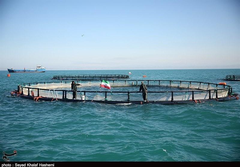2000 تن ماهی پرورشی استان بوشهر وارد بازار میشود