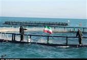 ظرفیت تولید ماهی پرورشی در خلیجفارس استان بوشهر 4500 تن افزایش یافت+فیلم