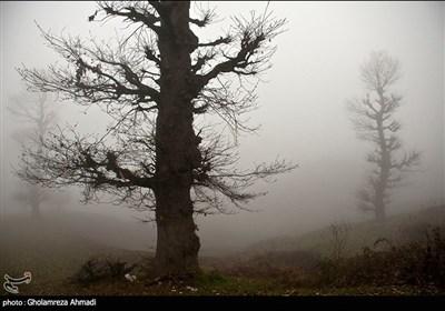 اطراف روستای غریب محله ، بهشهر تک درختان همراه با مه زمستانی