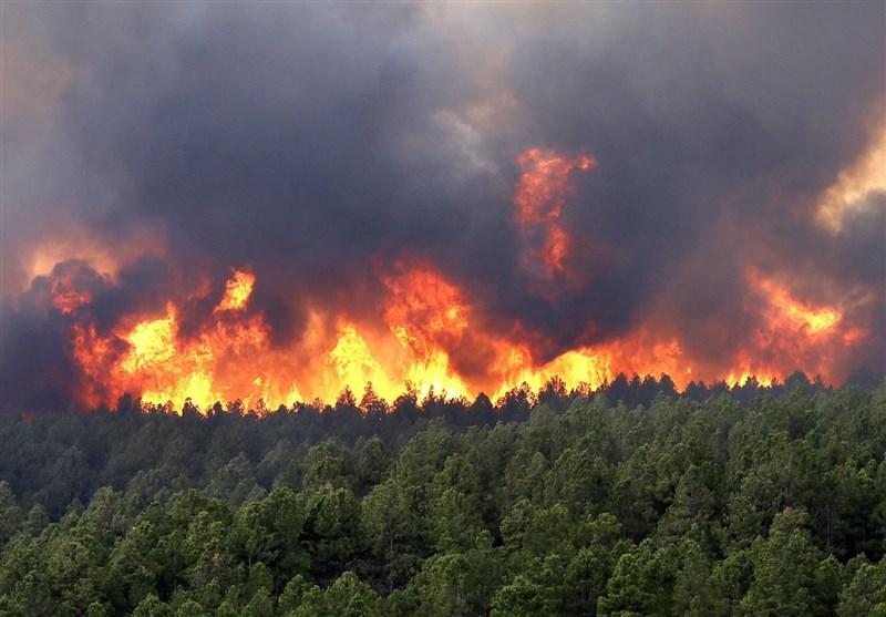 وقوع آتشسوزی در 1279 هکتار از مناطق چهارگانه محیط زیست تا اول خرداد
