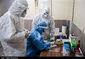 چالش با تنوع ژنتیکی ویروس کرونا/افزایش تستهای گرفتهشده تا سقف بیش از 700 نمونه