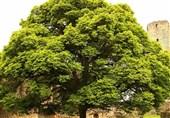 """10 فایده اساسی کاشت """"درخت"""""""
