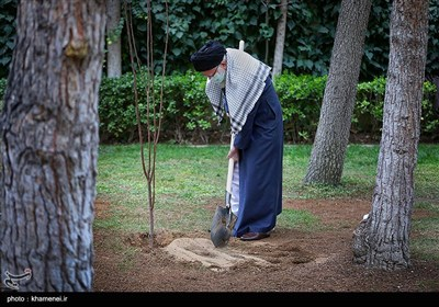 کاشت دو نهال میوه توسط رهبر معظم انقلاب