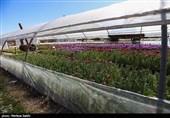 مانعزدایی در مسیر توسعه کشت گلخانهای خراسان رضوی/ تعداد گلخانهها افزایش مییابد