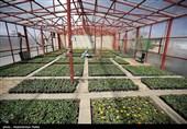 مزرعه سالمندان منطقه 14 شهر تهران راهاندازی شد