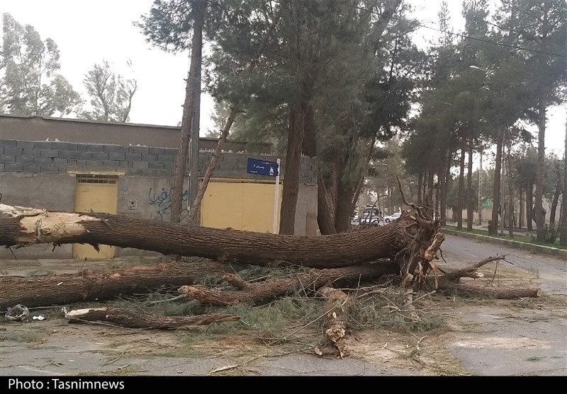 خسارت میلیاردی طوفان به زیرساختها در استان خراسان جنوبی؛ دسترنج یک ساله کشاورزان بر باد رفت