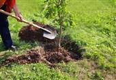 """""""کاشت 1000000 درخت"""" رزمایشی برای جوانان انقلابی"""