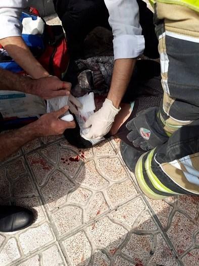 آتشنشانی , سازمان آتشنشانی تهران , آتشسوزی , چهارشنبه سوری | چهارشنبه آخر سال ,