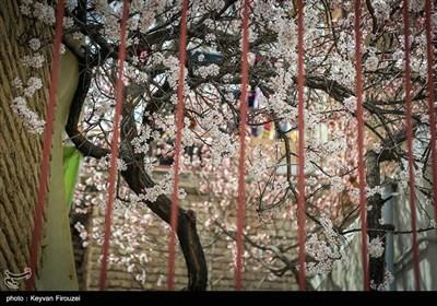 Iran's Beauties in Photos: Spring in Sanandaj